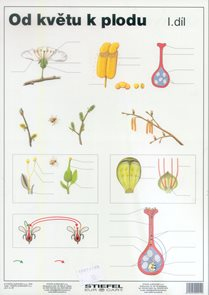 Od květu k plodu I - tabulka A4