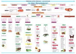 Zoologie - tabulka přehled učiva