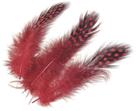 Dekorativní peříčka Guinea 20 ks, červená