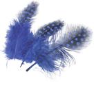 Dekorativní peříčka Guinea 20 ks, modrá