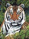 Malování podle čísel - Tygr v trávě