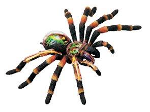 Anatomický model X-ray - tarantule