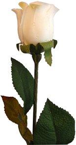 Růže bílá s rosou 60 cm