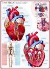 Puzzle Srdce 1000 dílků