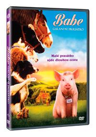 DVD Babe: Galantní prasátko