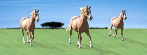 Záložka Úžaska - Koně