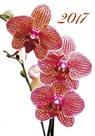 Orchideje kalendář nástěnný 2017