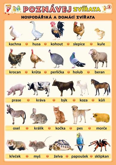 Poznávej zvířata - Hospodářská a domácí zvířata - Kupka a kolektiv Petr - 21x29,7